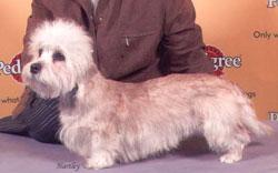 bobcrufts2004